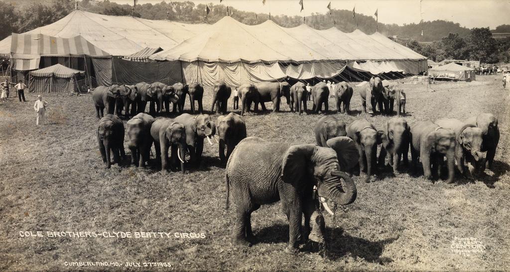 Fotó: Edward J. Kelty: Cole Brothers-Clyde Beatty Circus elefántjai, 1933-35 © Collection of Alain Siegel / Edward J. Kelty