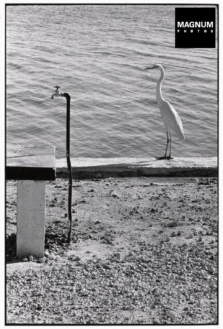 Fotó: Elliott Erwitt: USA. Florida Keys. 1968 © Elliott Erwitt/Magnum Photos