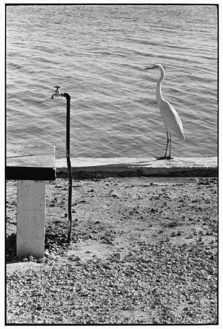 Fotó: Elliott Erwitt: Florida Keys, USA, 1968 © Elliott Erwitt / Magnum Photos