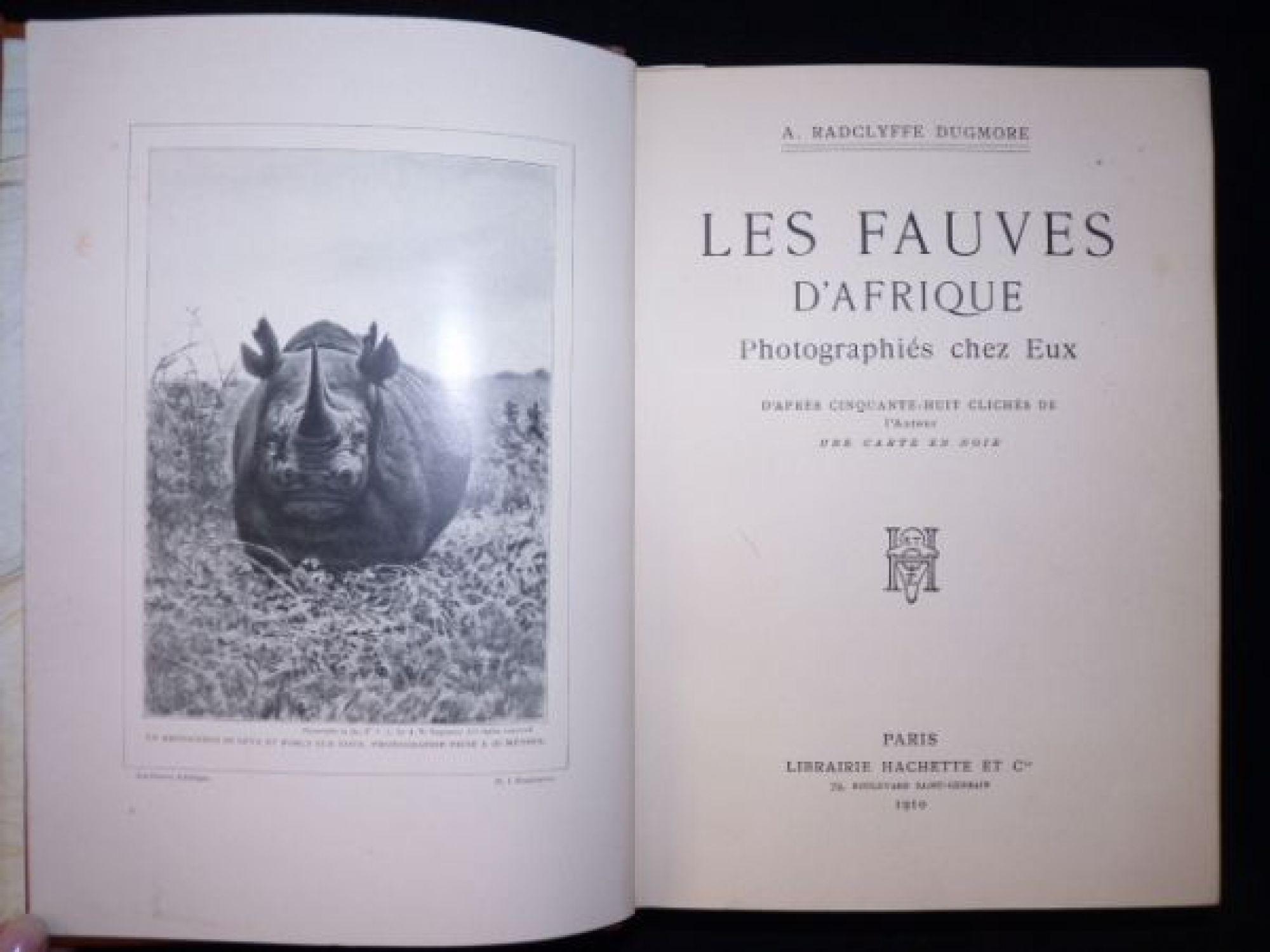 Az első felvétel, melyen egy orrszarvú támadni készül. Mintegy 14 méterről készítette a fotográfus a képet. <br />Fotó: Arthur Radclyffe Dugmore: Kenya, Afrika, 1909<br />Megjelent: Les Fauves d'Afrique, Paris, 1910