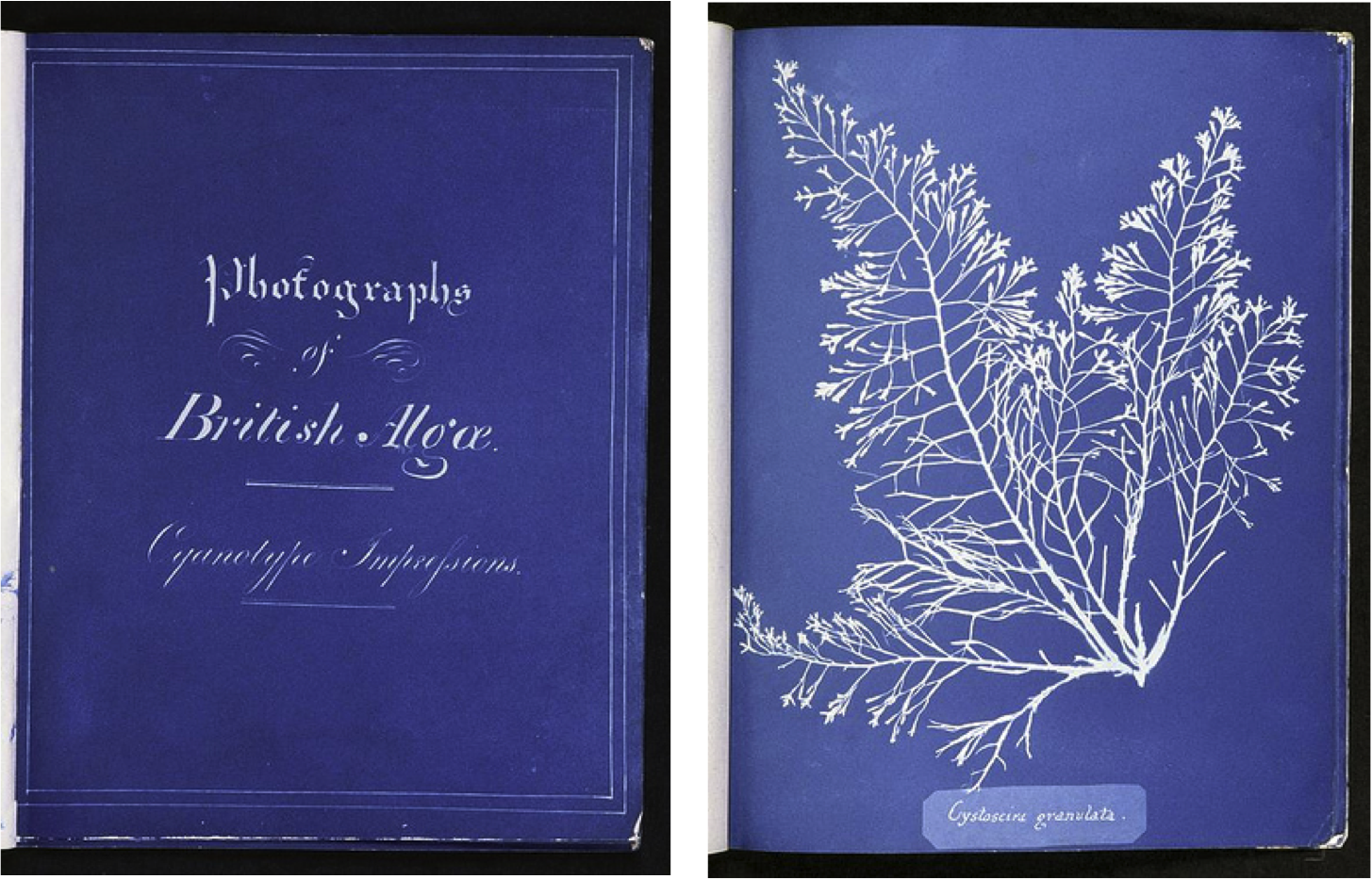 photographs-of-british-algae_1.png