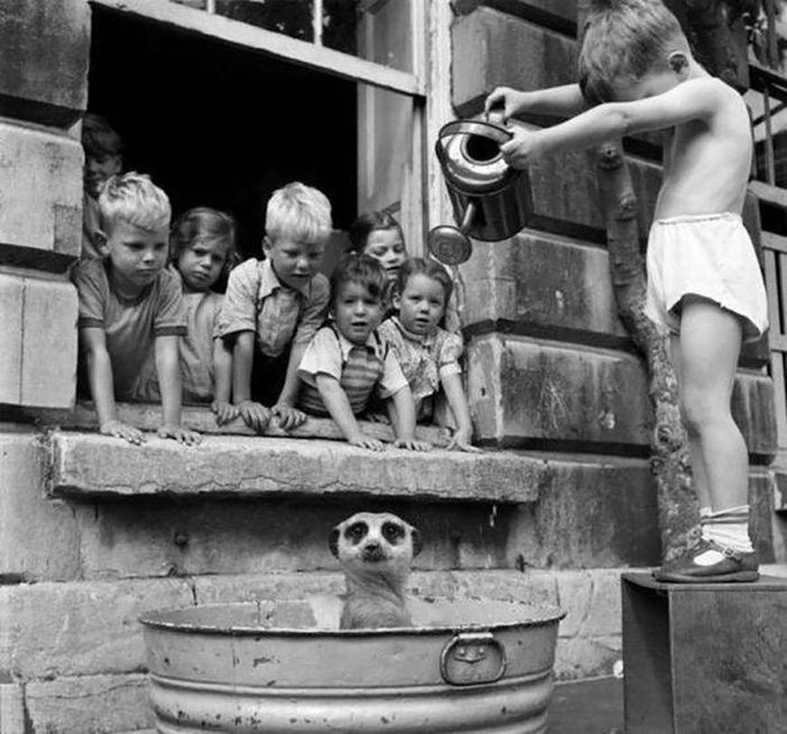 A szurikátát fürdető gyekekeket ábrázoló kép többek között a vintag.es oldalán tünt fel. A képhez fűzött információ szerint a fotó az ötvenes években készült, valahol a Dél-afrikai Köztársaságban.