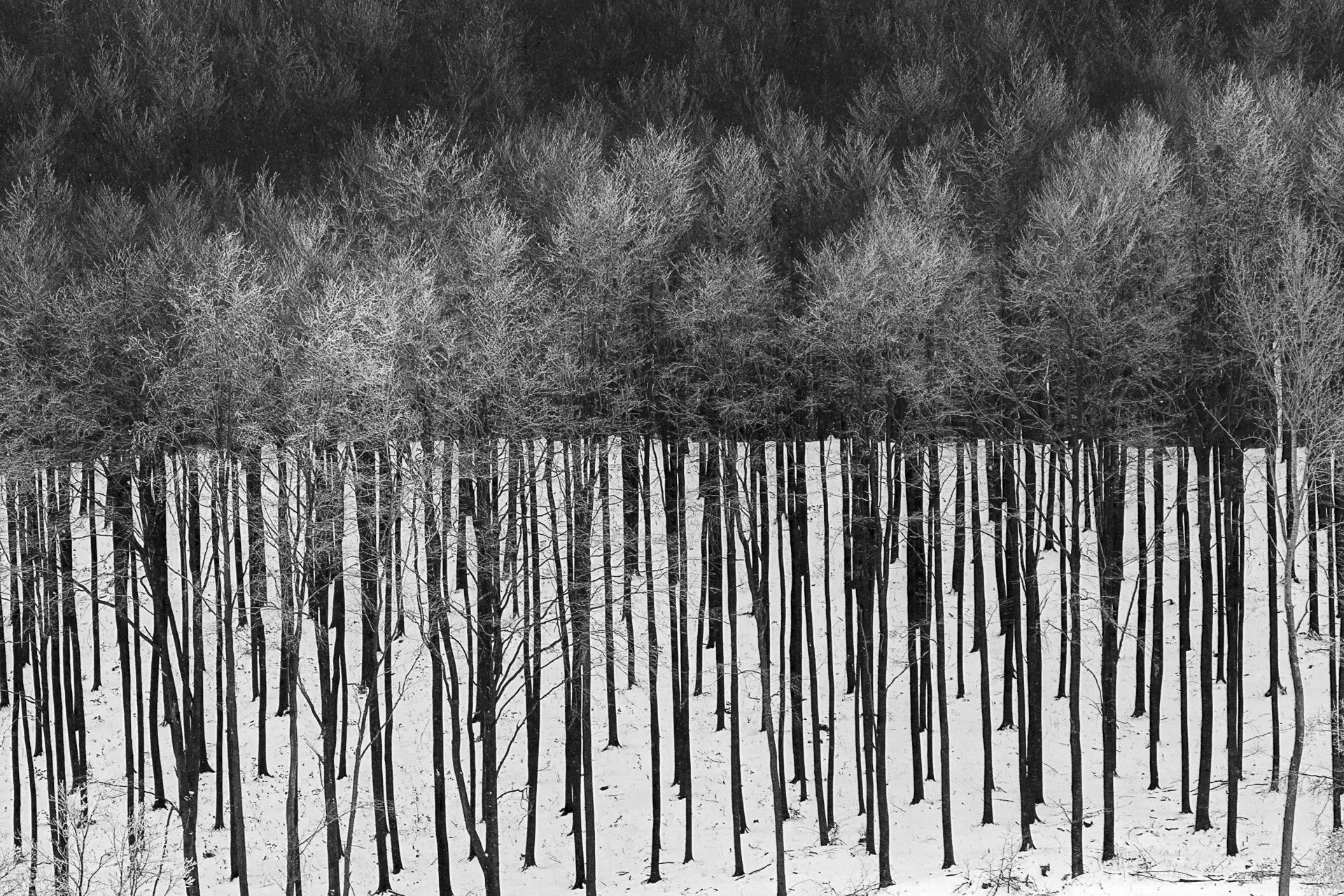 Fotó: Urbán Helga: Vonalkód No.2<br />A legtöbb természetfotót a kép megálmodása, gondos tervezés előzi meg. Ritka ajándék azonban, amikor a természet magától kínál fel egy témát. Ilyen alkalommal készült ez a kép is. A frissen leesett hó híre felcsábított a Bükk hegység legmagasabb pontjára. Ezerszer megtettem már ugyanezt a kört, de most valahogy megláttam ezt a részletet. Nem tudom, máskor is így nézett-e ki, és elsiklottam felette, vagy csak most, egy rövid időre alakult ilyenné. A távoli fenyőerdő közepén egy részt tarra vágtak, a maradék fák tűlevelein pedig megült a frissen hullott hó, amely így érdekes kontrasztot adott a fehér hóval és a felkopaszodott fekete fatörzsekkel.<br /><br />Fekete-fehér természetfotók<br />1. díj