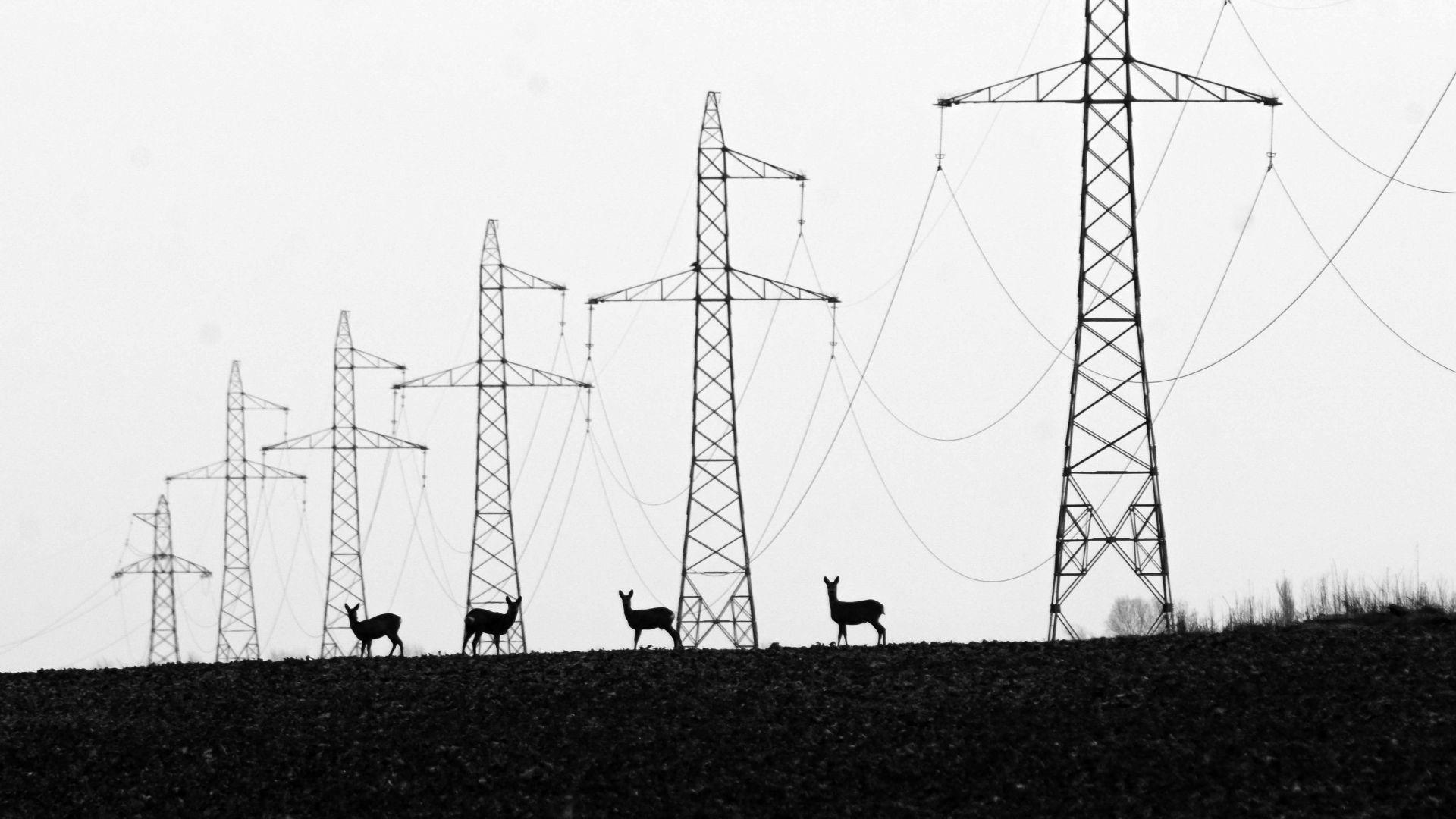 Fotó: Lakatos János: Felvillanyozva<br />Csongrád melletti elhúzódó magasfeszültségű áramvezeték alatt legelészett ez a pár őz. Első ránézésre nem volt valami nagyon érdekes, de mivel sétáltam tovább, egyre jobbnak tűntek az arányok.<br /><br />A fenntartható energiatermelés és a természet kapcsolata<br />1. díj