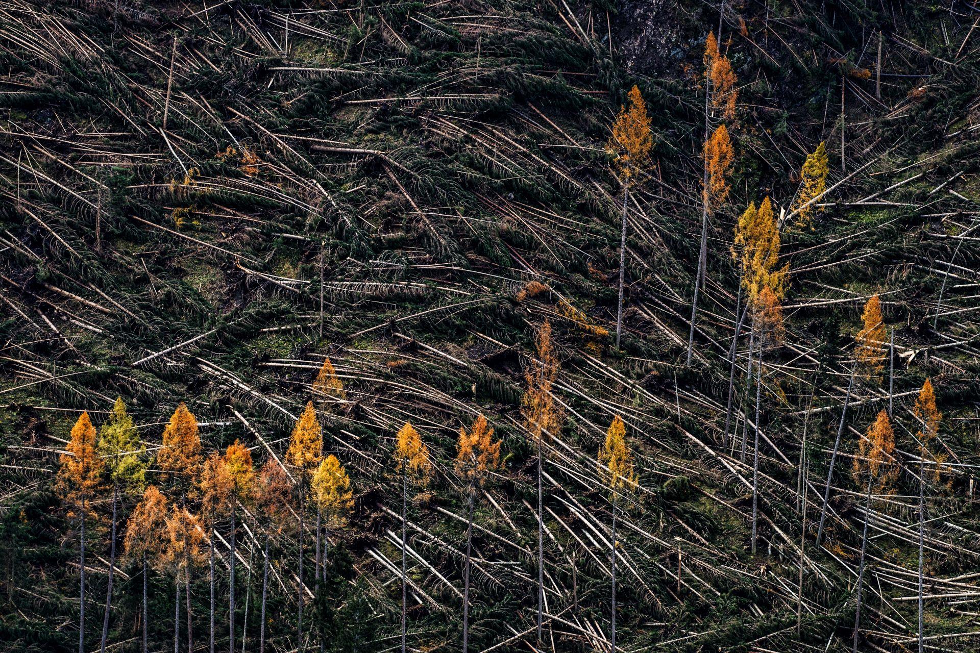 Fotó: Dr. Simán László: Tornádó a Dolomitokban<br />Az utóbbi években egyre gyakoribbá váltak a szokatlan katasztrófahelyzetek. Két éve ősszel az olasz Dolomitok lombhullató fenyveseit tarolta le széles sávban egy vihar, óriási anyagi kárt okozva. A helyszínre érkezve elnémult az addig vidám fotós csapatunk.<br /><br />Kezünkben a Föld<br />2. díj<br />