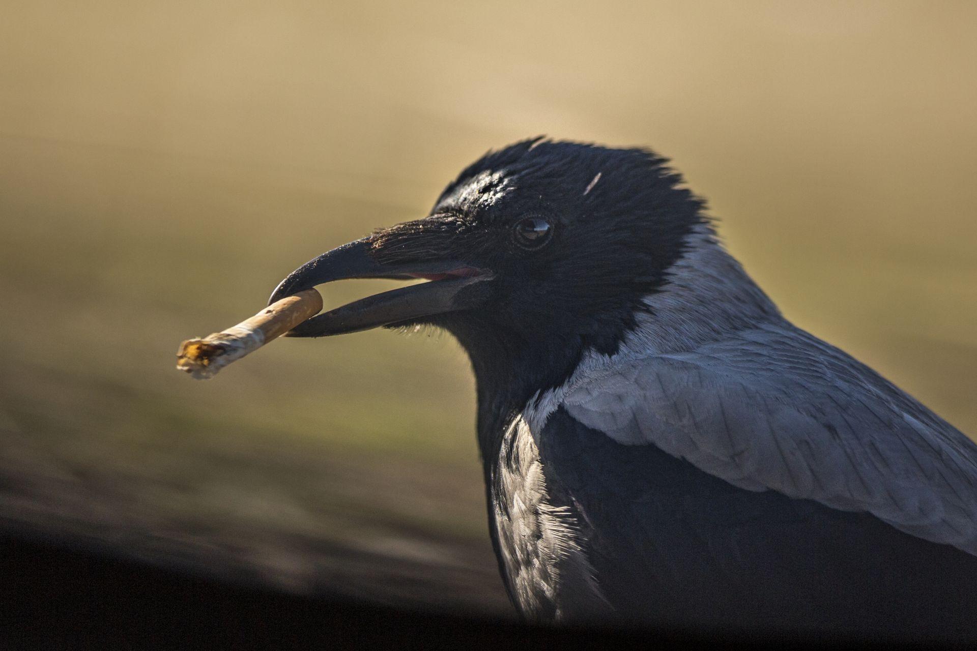 Fotó: Rácz Péter: Kérsz egy slukkot?<br />A szemetelés, akár csak egy csikk eldobása is, komoly következményekkel járhat a természetben. Egy cigarettacsikk lebomlási ideje 10-12 év, ebbe bele sem gondol az, aki könnyedén eldobja. A madarak pedig megeszik az éveken át a földben megbúvó, mérgező anyagokat tartalmazó hulladékainkat.<br /><br />Kezünkben a Föld<br />Dícséretre méltó<br />