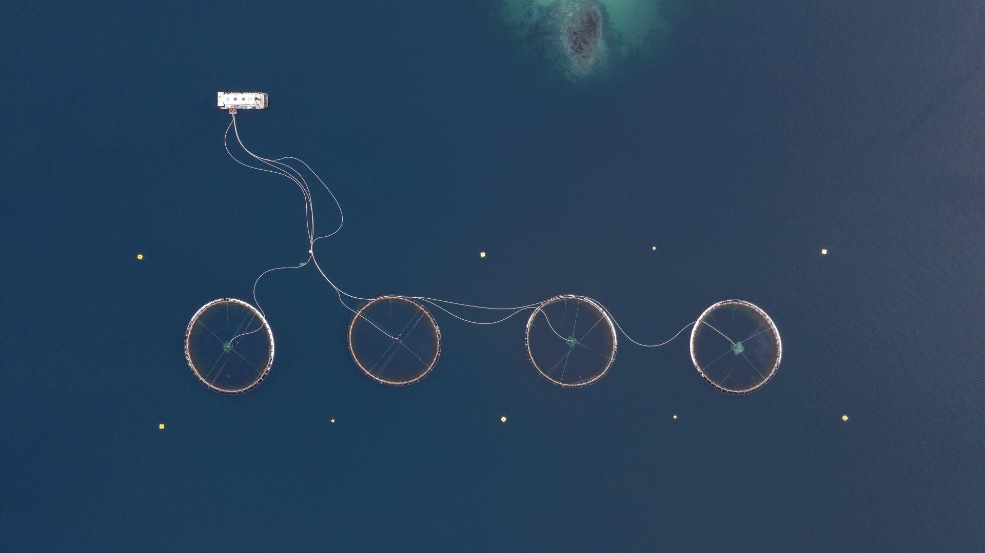 Fotó: Rácz Péter: Űrlény négykerekű biciklivel<br />Norvégia 1960-ban elsőként hozott létre halgazdaságokat, ahol úszó ketrecekben tenyésztett lazacokat. Ma már számos ilyen haltelep található a fjordokban. Ezekkel a telepekkel próbálják kielégíteni folyamatosan a növekvő igényeket. A Föld teljes lazactermelésének 2/3-át ilyen akvakultúrák adják.<br /><br />Kezünkben a Föld<br />1. díj<br />