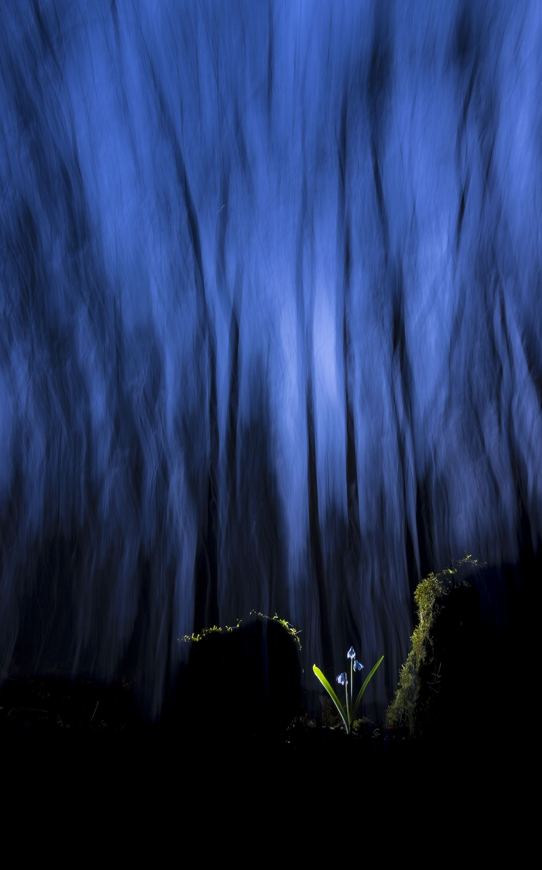 Fotó: Litauszki Tibor: Az esthajnal csillaga<br />Egy tavaszi alkonyatkor készült a kép , amikor észrevettem az avarban a két farönk között megbúvó apró csillagvirágot. Ellenfényes megvilágítással és hosszabb expozícióval kaptam ezt az izgalmas képet.<br /><br />Növények és gombák<br />3. díj