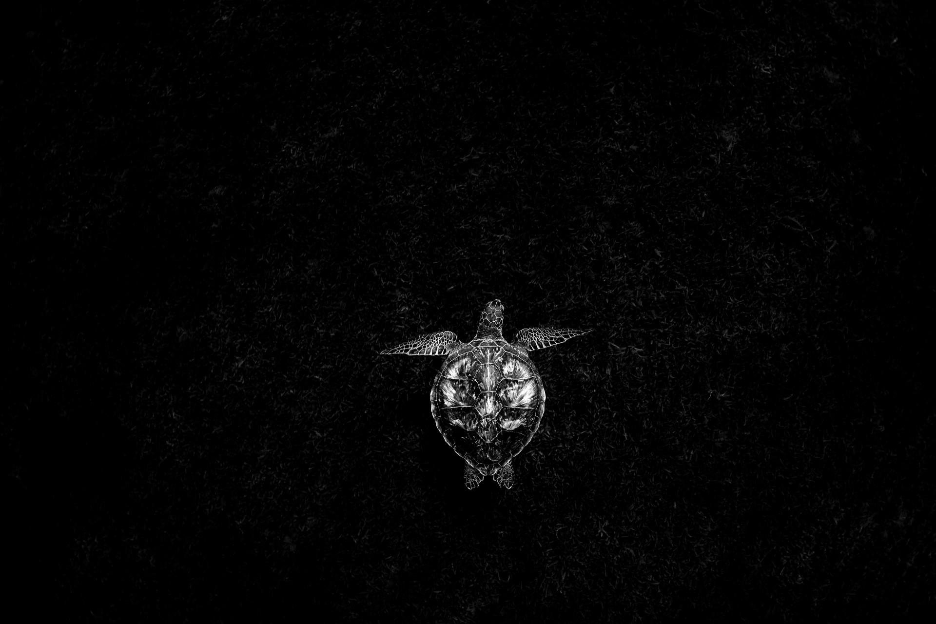 Fotó: Tökölyi Csaba: Nyugalom<br />Kategória: Fekete-fehér természetfotók<br />Helyezés: 2. díj<br /><br />A tengeri fű fedte aljzat felett méltóságteljesen úszó teknős a karib-tengeri Guadeloupe partjainál.