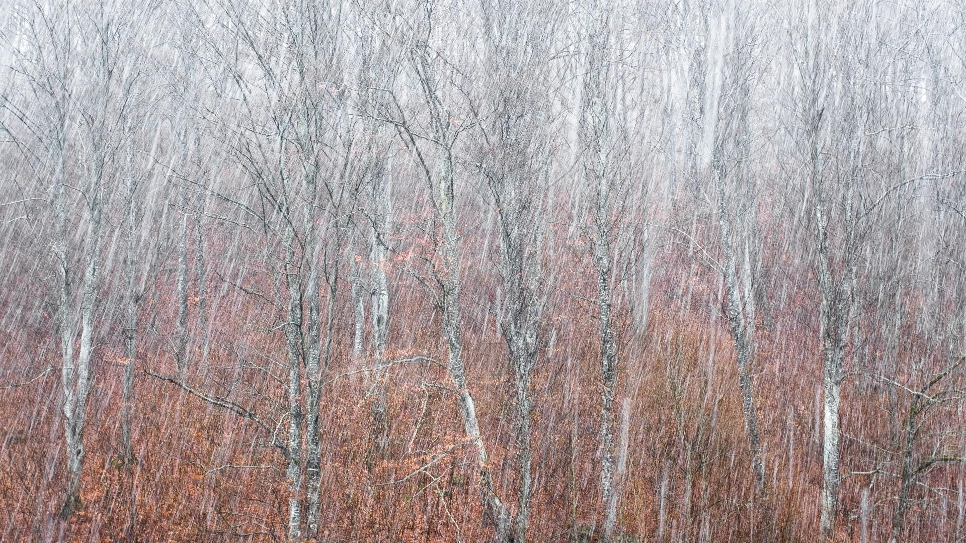 Fotó: Fáth Ádám: Évszakok találkozása<br />Kategória: Növények és gombák<br />Helyezés: 3. díj<br /><br />Hirtelen hóvihar egy erdélyi dombon, ahol a fákat még az őszi színes levelek tarkítják. Idén februárban egy erdélyi fotóstúrára indultunk néhány barátommal. Annak ellenére, hogy az utat alapos tervezés előzte meg, egy nem várt pillanat hozta meg az emlékezetes képet.
