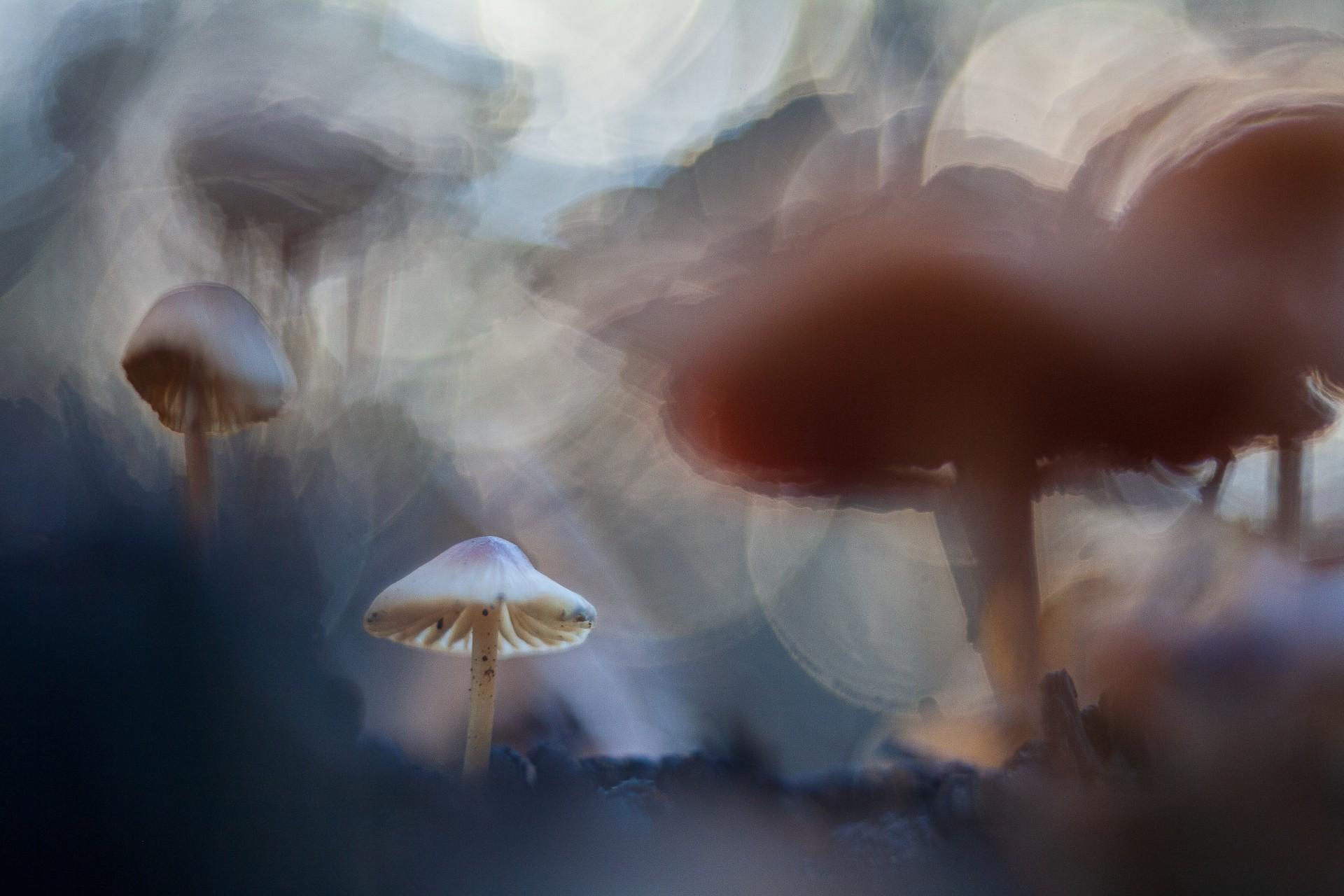 Fotó: Jantyik Tibor: Óriások között<br />Kategória: Növények és gombák<br />Helyezés: 1. díj<br /><br />Az októberi esőzések után az erdő kidőlt fáinak az elkorhadt tönkjén a gombák gyors növekedésnek indulnak. A tönk egyenetlen széle kitűnő lehetőséget ad arra, hogy a kissé alsó látószögben fotózott gombák az élességponton kívül esve különleges alakzatokat formáljanak. Pósteleki erdő, Békéscsaba környéke. Ennek a leképzésében nagy segítséget nyújt egy különleges, de egyszerű felépítésű objektív, mint ami a diavetítőkben is van.