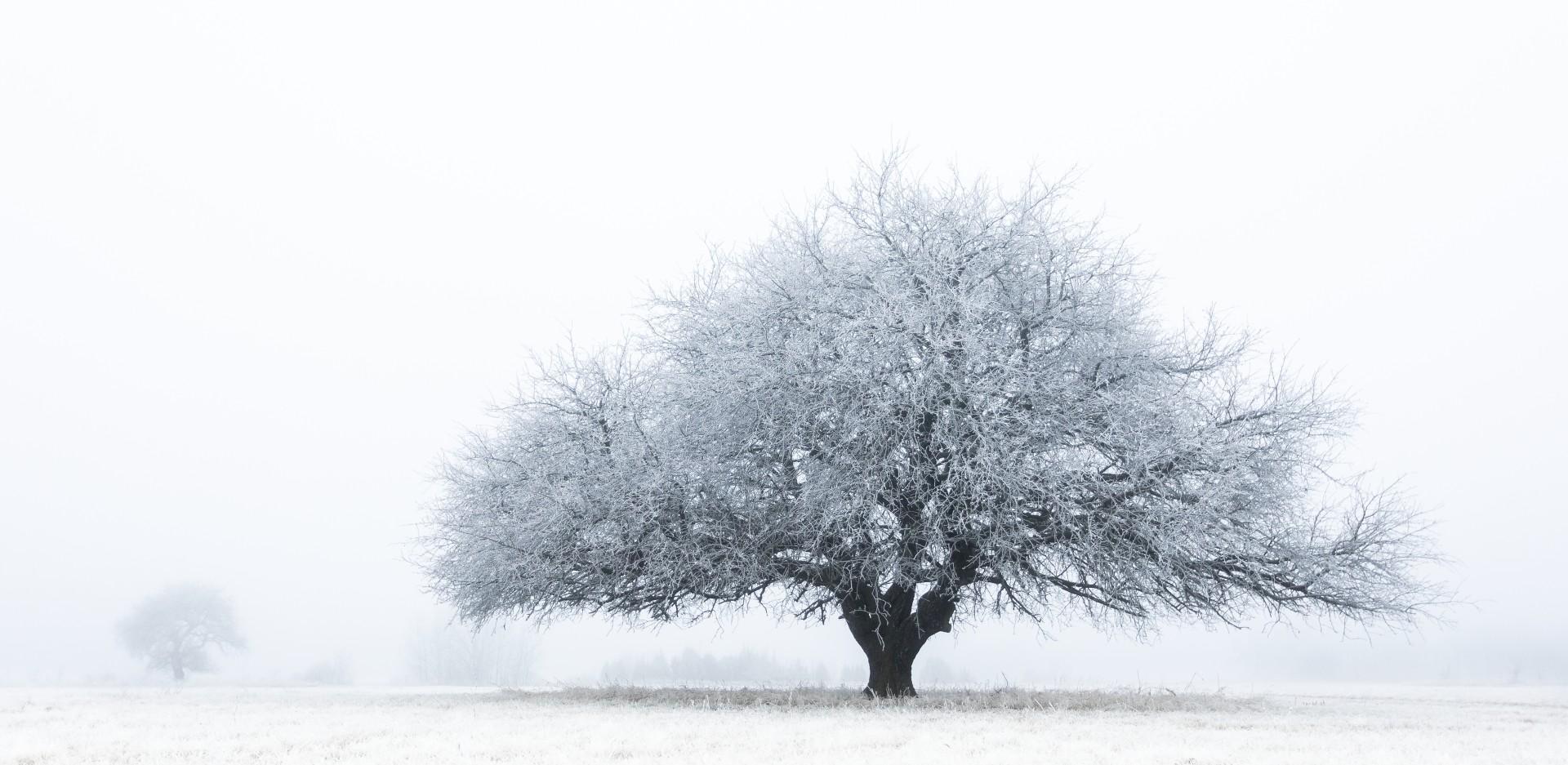 Fotó: Litauszki Tibor: Vackorok a zimankóban<br />Kategória: Növények és gombák<br />Helyezés: 2. díj<br /><br />Zuzmarával takart vadkörtefák egy januári hideg reggelen a Páhi réten. Az extrém fagyos éjszaka után hajnalban köd keletkezett a rétre, így a pára azonnal az ágakra fagyott és díszes köntösbe öltöztette a vackorfákat.