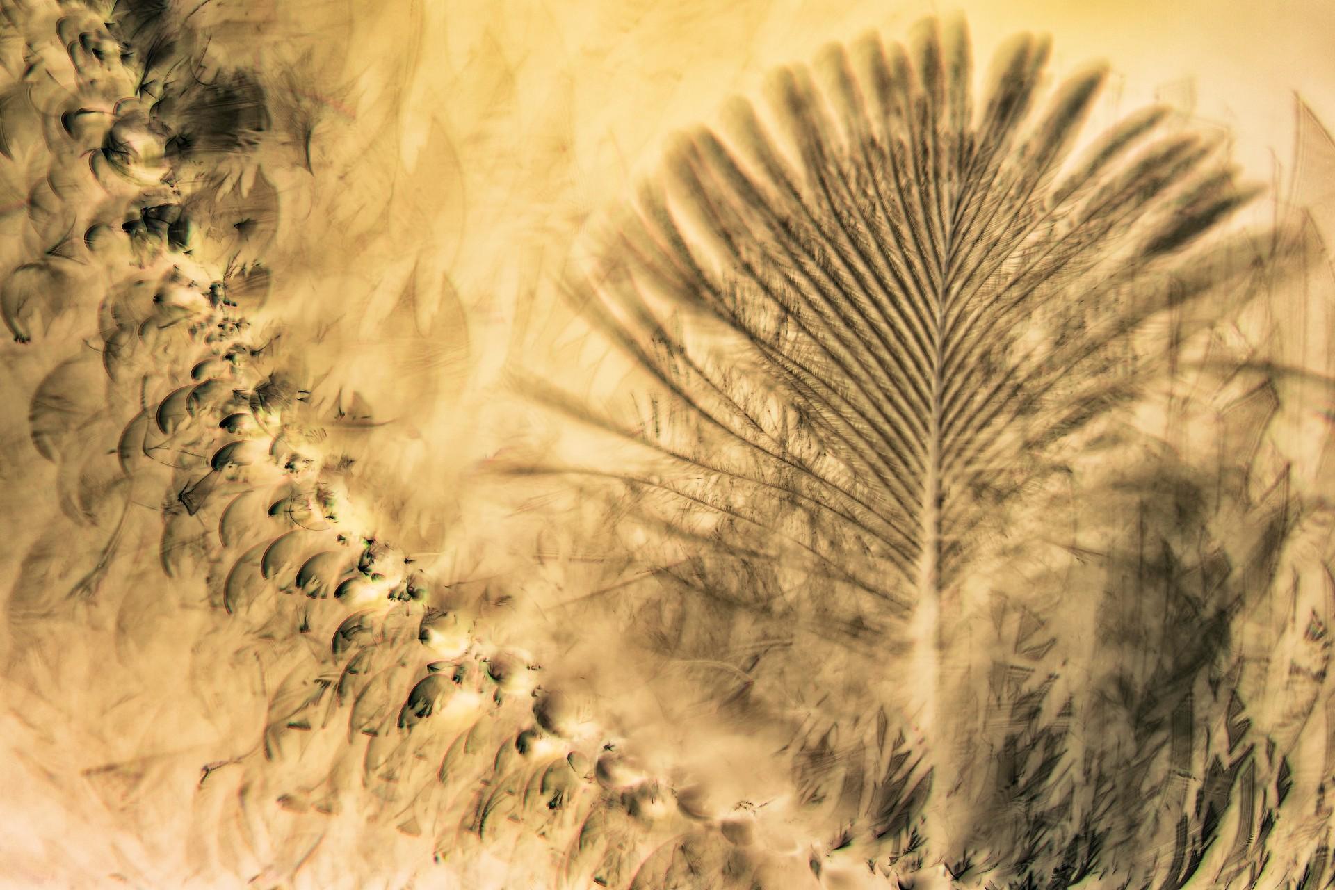Fotó: Dr. Nagy Edit: Eldoradó<br />Kategória: Kompozíció, forma és kísérletezés<br />Helyezés: 3. díj<br /><br />Reggeli harmatos pókhálóba ragadt pihe a fenyőfa ágai között egy nyárvégi reggelen, inverz színű képen. A kertünkben a fenyőfán készült a kép fordítógyűrűvel. A kép finom részletei és aranyba hajló színvilága különösen megragadták a fantáziám. A toll számos indián kultúrában fontos szimbólum, összhatásában a kép megcsillantja Eldoradó aranyát, az eltűnt civilizáció misztériumát. Fotográfiáimban azt szeretem a legjobban, ha valamit szimbolikusan meg tudok fogalmazni, a természetben található képek segítségével.