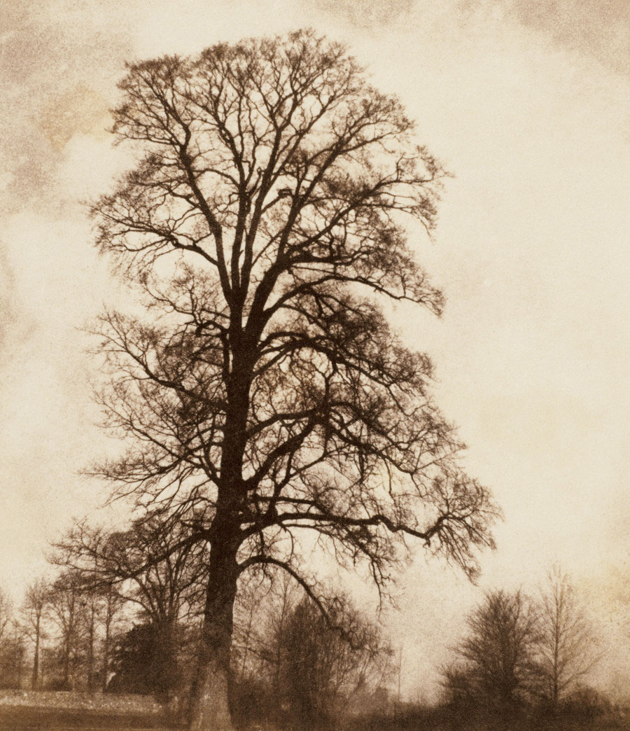 William Henry Fox Talbot <br />The Great Elm at Lacock<br />1843-45<br />Photograph, salted paper print from a paper negative<br />© Wilson Centre for Photography