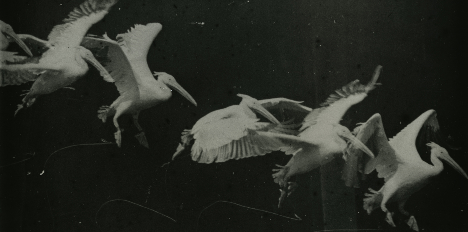 mareybirds.jpg