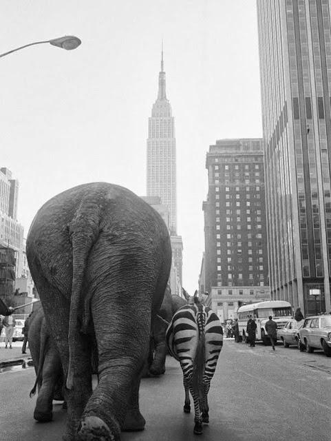 3rd Street, Manhattan, NYC, 1968 (Photo by Otto Bettmann).jpg