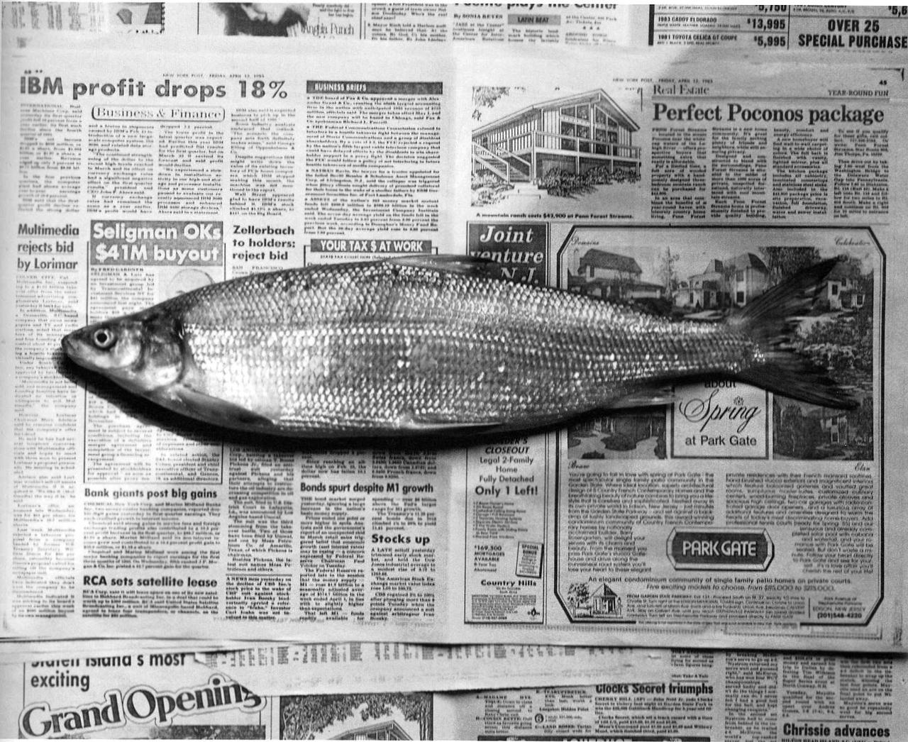 mapplethorpe_fish.jpg
