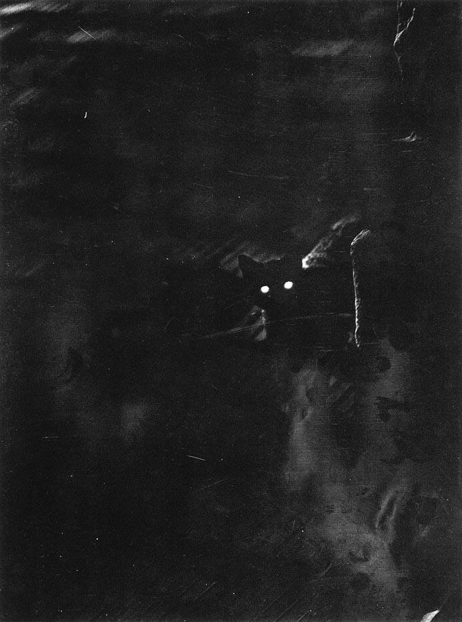 vadas1937.jpg