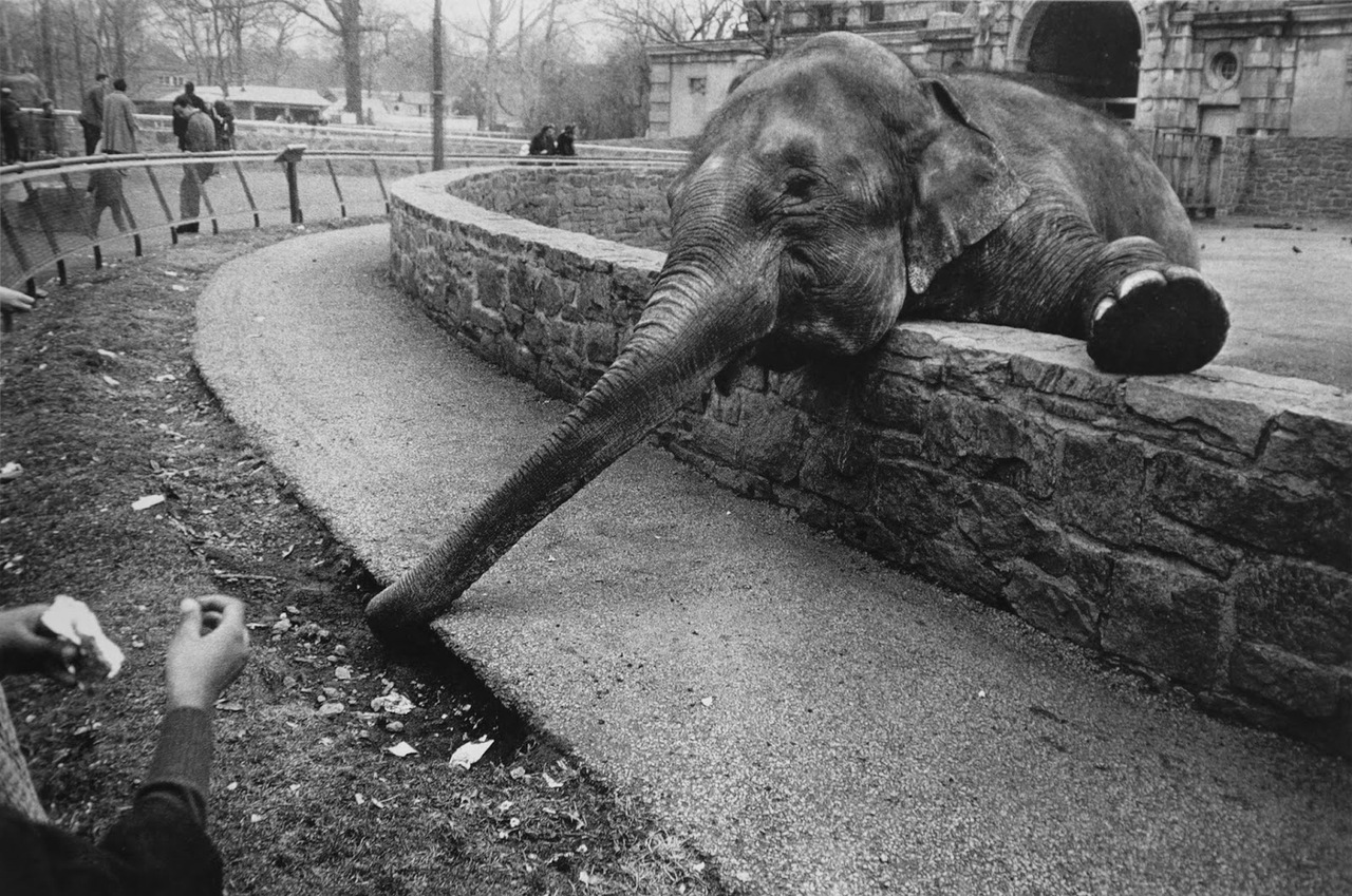 winogrand_zoo.jpg