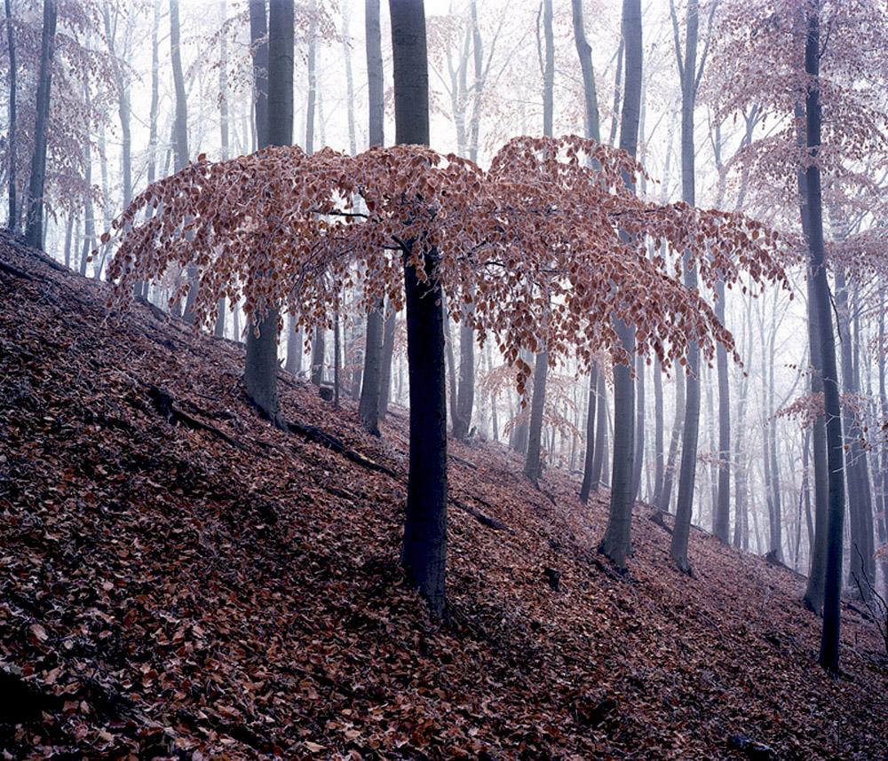 012 daniel kovalovszky green silence.jpg