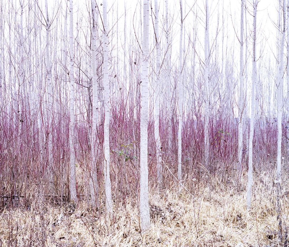 013 daniel kovalovszky green silence.jpg