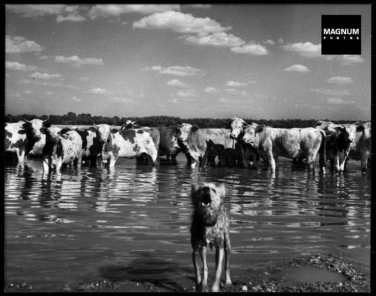 Fotó: Werner Bischof: Magyarország, 1947 © Werner Bischof/Magnum Photos