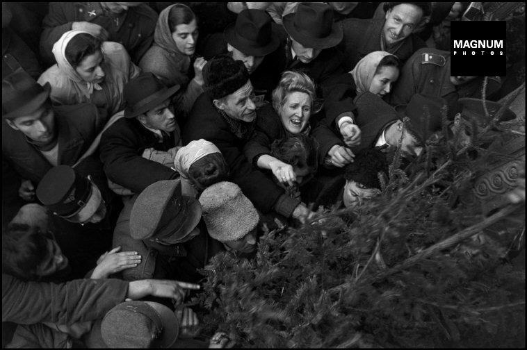 Fotó: Werner Bischof: Budapest, Harc a karácsonyfákért, 1947 © Werner Bischof/Magnum Photos