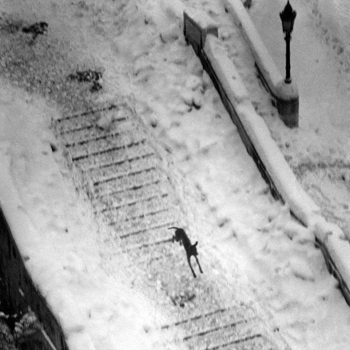 Fotó: Reismann János: Kutya a havas budavári lépcsőkön, 1970 körül, 18x18 cm © Magyar Fotográfiai Múzeum