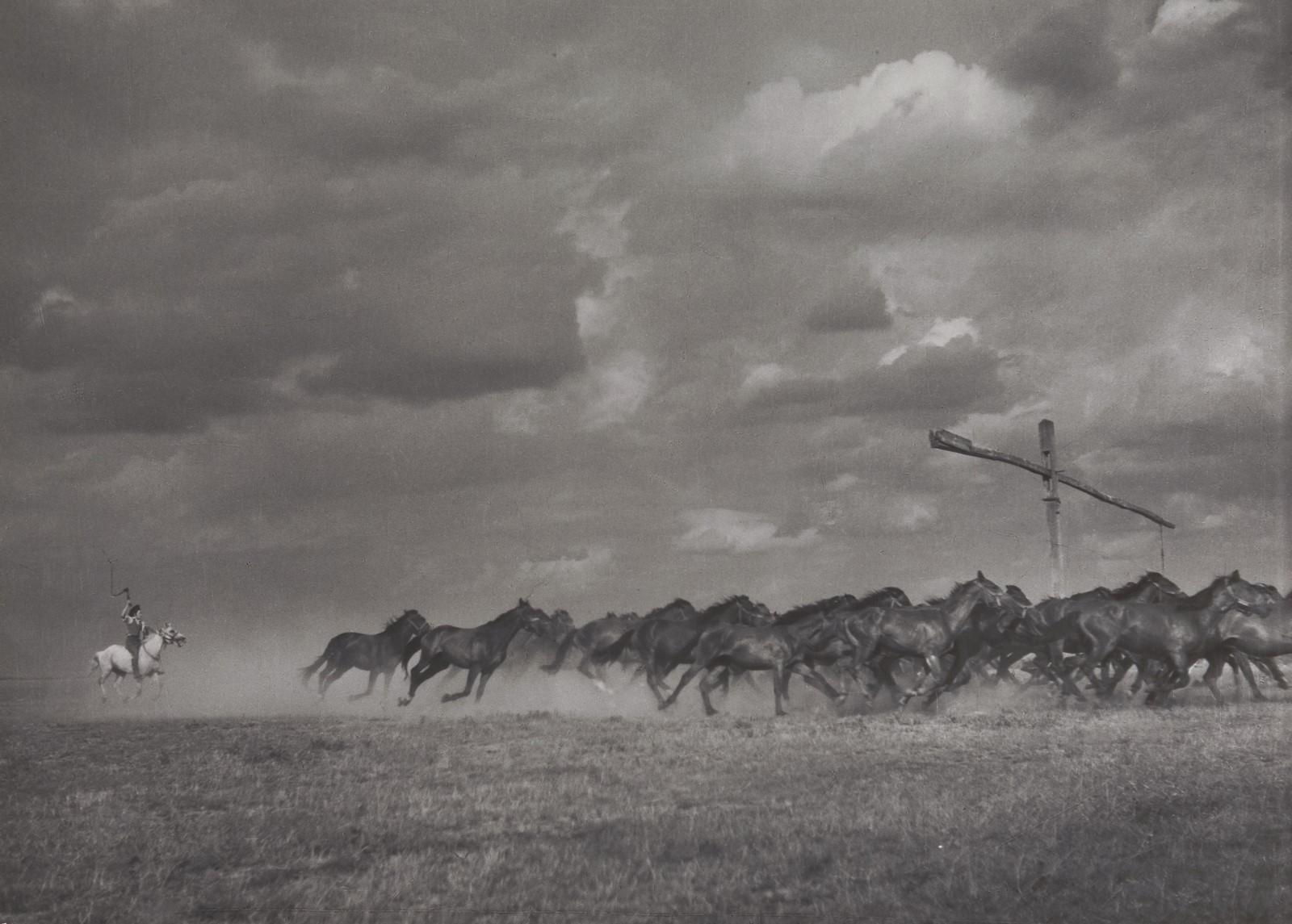 Fotó: Vadas Ernő: Ménesterelés, 1958 © Magyar Fotográfiai Múzeum