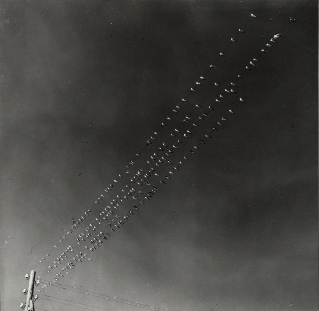 Fotó: Vadas Ernő: Fecskék, 1940 © Magyar Fotográfiai Múzeum
