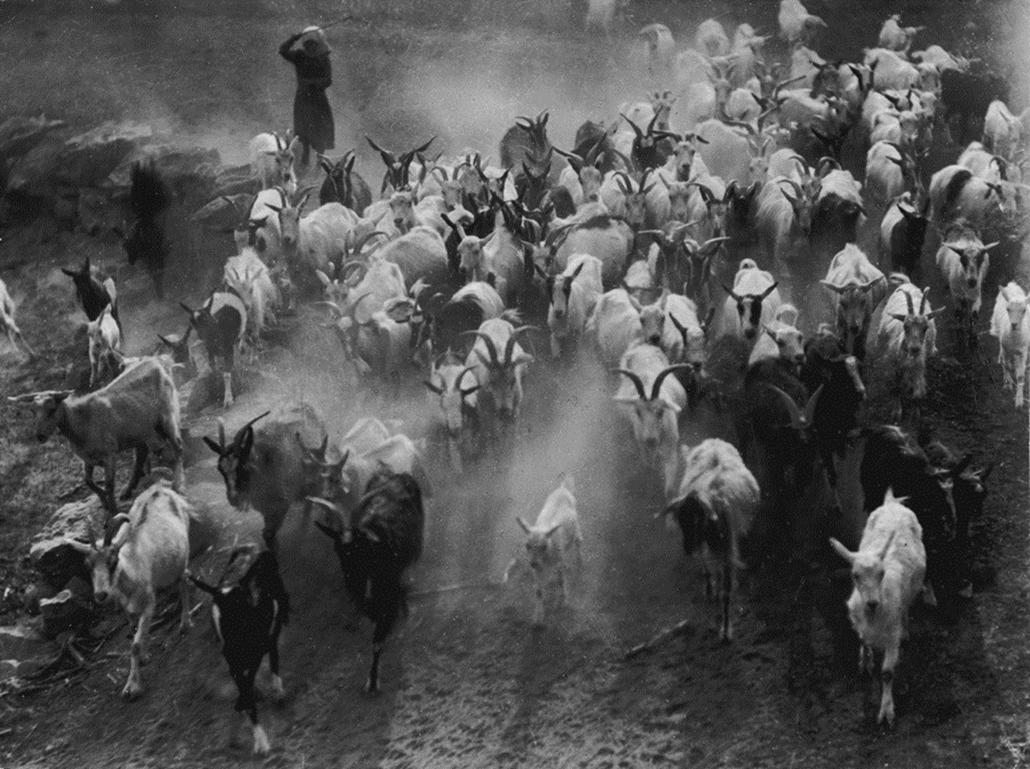 Fotó: Vadas Ernő: Poros úton, 1935 © Magyar Fotográfiai Múzeum