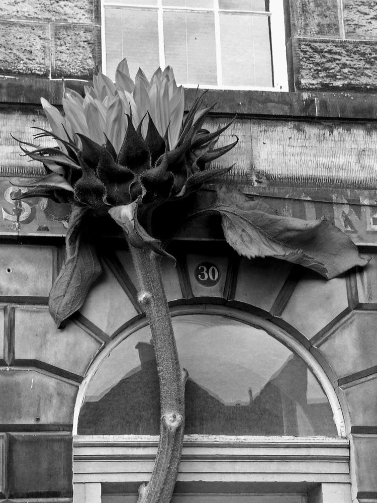 two_walk_in_edinburgh_07.jpg