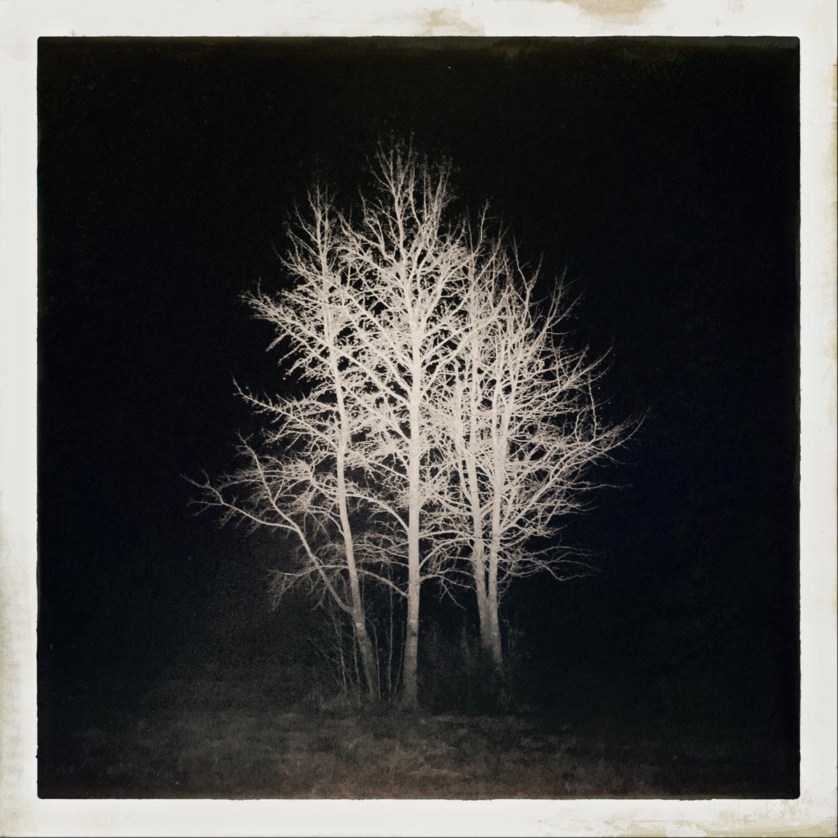 night_tree.jpg