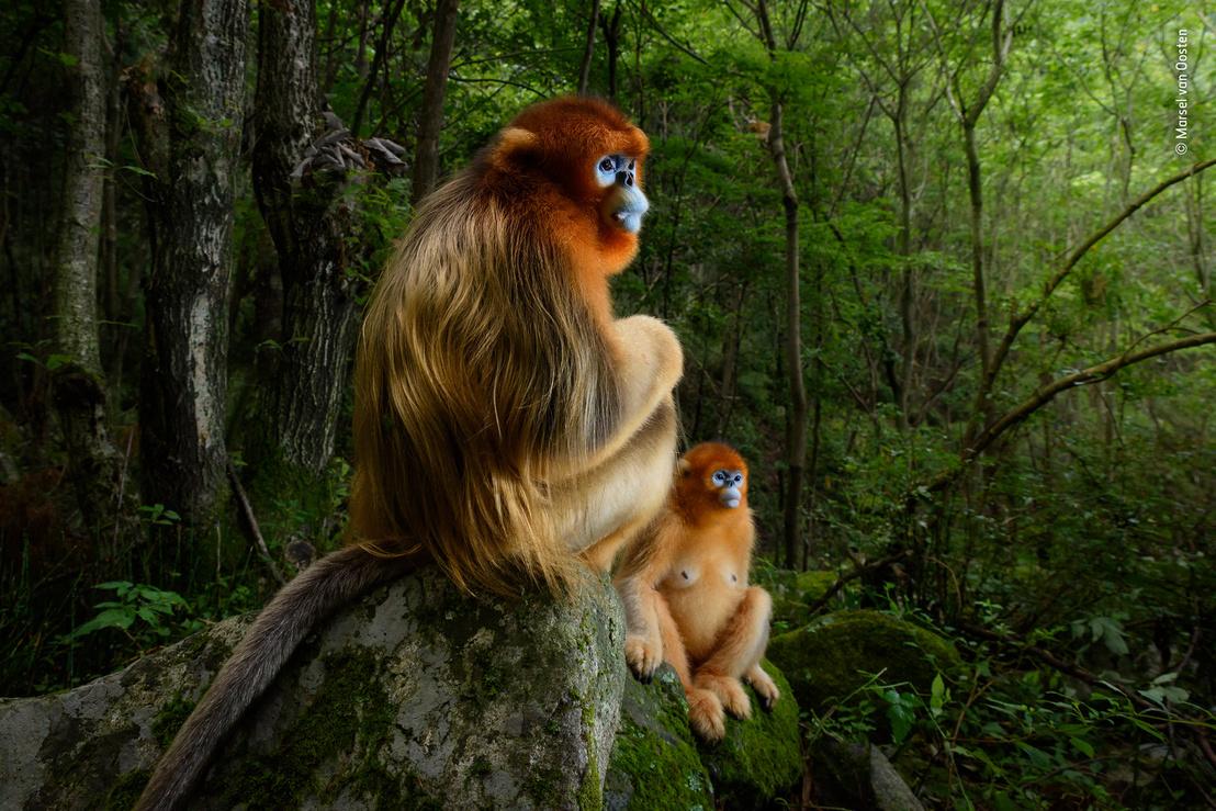 wildlifephotographer2018.jpg