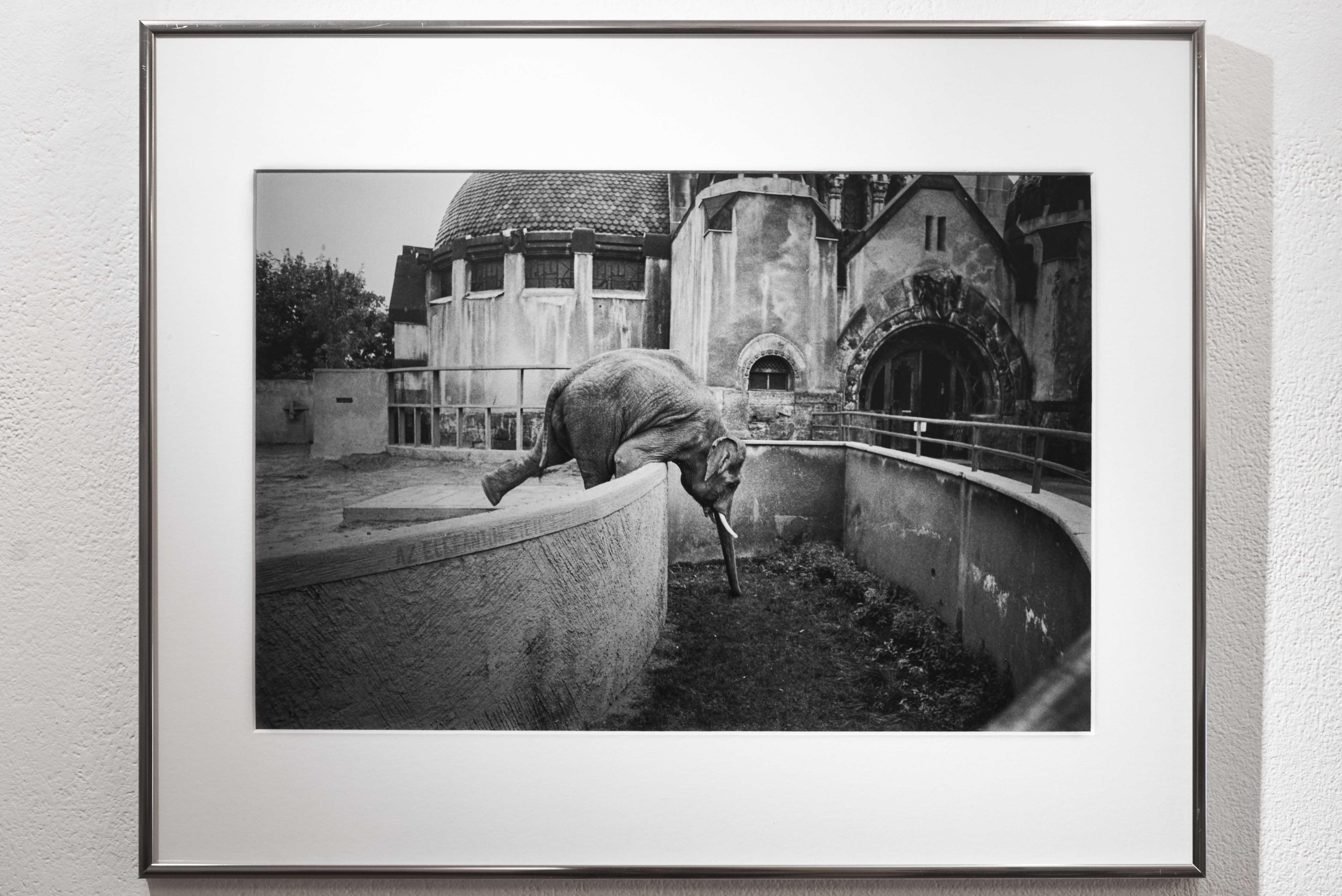 Szabó Judit: Elefánt, Budapest, 1983. / Elephant, Budapest, 1983. <br />Fotó: Kiss Imre