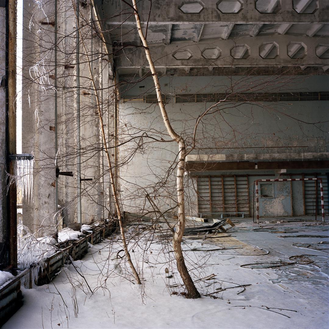 Nyírfa tör át egy elhagyatott tornaterem padlóján Pripjaty  szellemvárosában. - 2010. december, Csernobil, Ukrajna © Rena Effendi, Prix Pictet Ltd.jpg