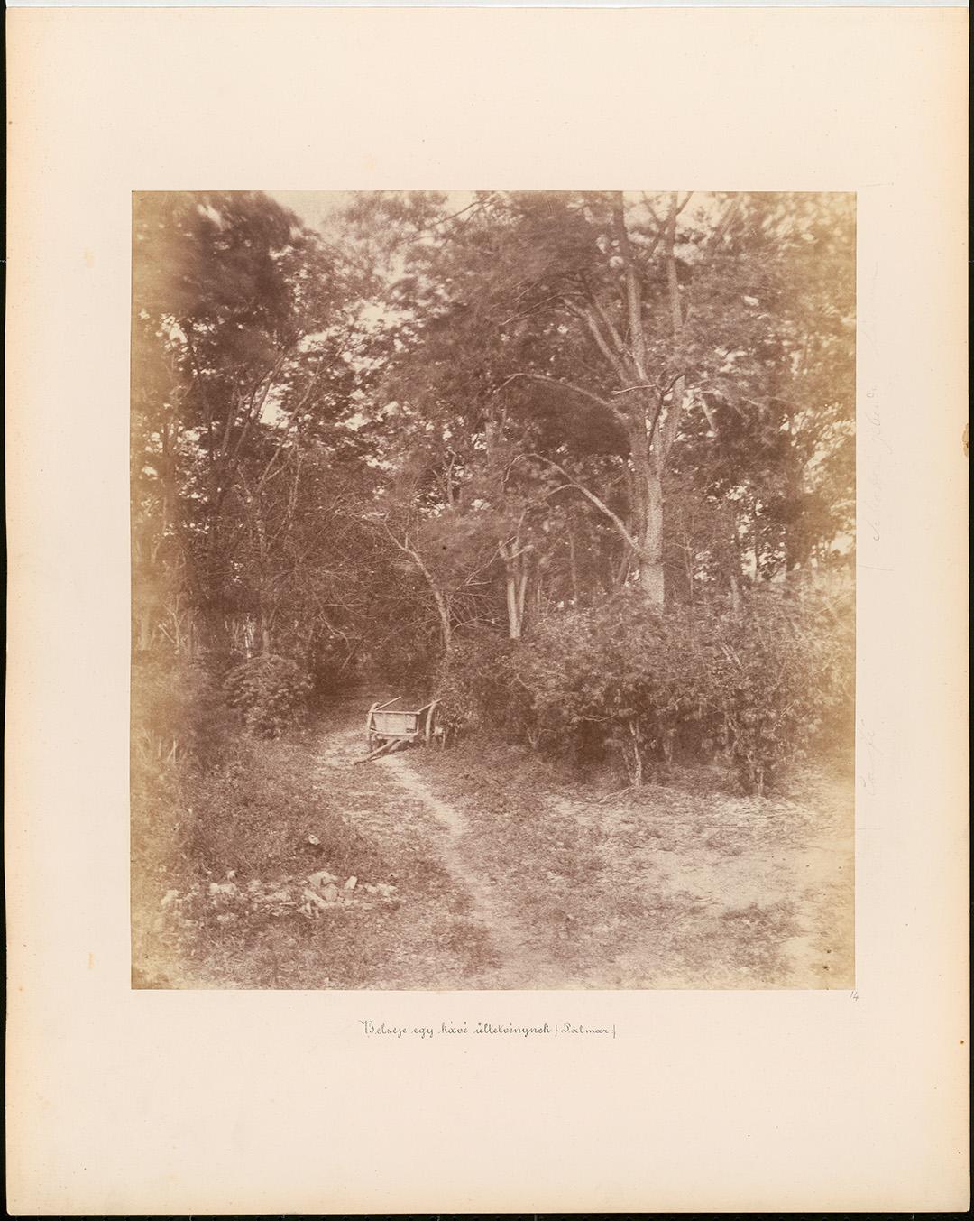 Fotó: Rosti Pál: Kávéültetvény Palmarban, 1857, Venezuela © Magyar Fotográfiai Múzeum