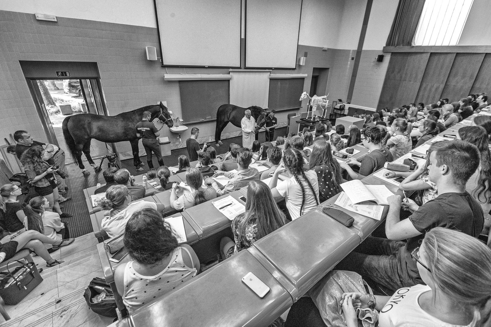 Mindennapi élet (egyedi)<br />3. díj: Marosfalvi Péter (Zsaru Magazin): Egyetemre megy a ló<br /><br />Fotó: Megtelt az előadó.