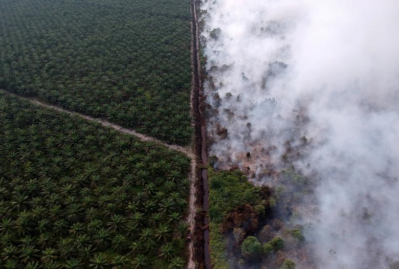 Fotó: Wahdi Setyawan: Erdőtűz egy olajpálma-ültetvény mellett, Kumpeh Ulu, Muaro Jambi, Indonézia, 2019. július 30. © Antara Foto/Wahdi Setyawan a REUTERS-en keresztül