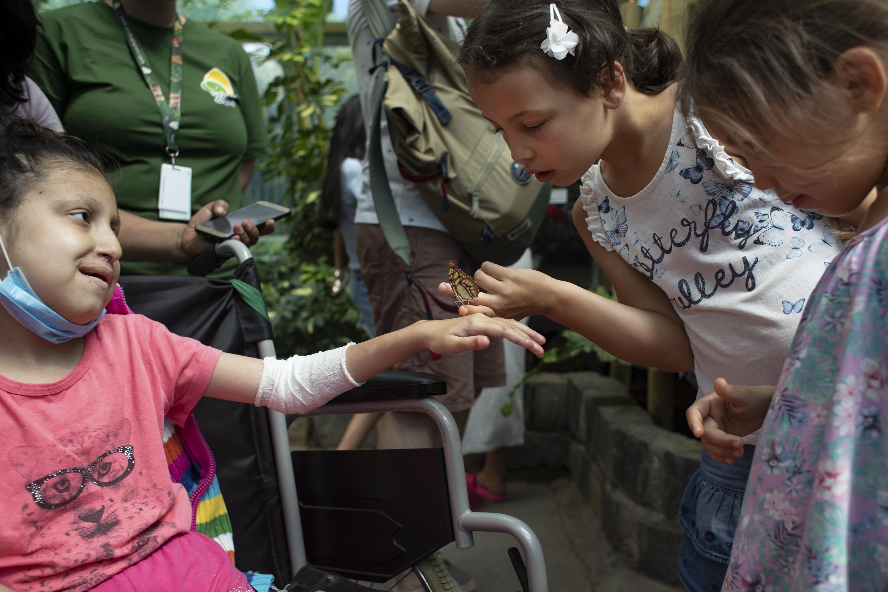 Fotó: Kovács Bea: A Fővárosi Állatkertben, ahová születésnapi ajándékként jutott el, gyerekek kedveskedtek neki. Társaságuk nagy örömmel töltötte őt el Mirandát.
