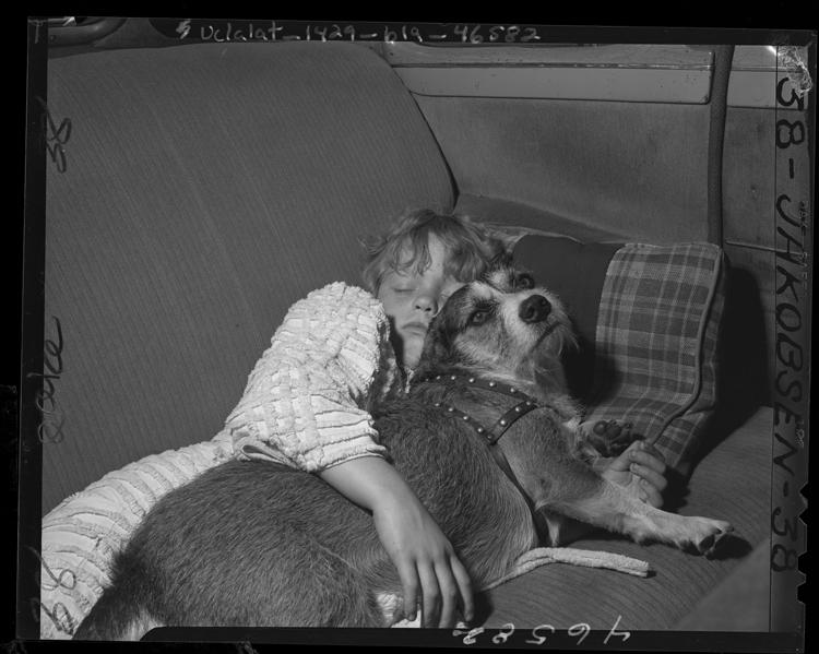 Fotó: A hajléktalan Linda Henderson egy autóban alszik kutyájával, 1947 © UCLA Library/Los Angeles Times
