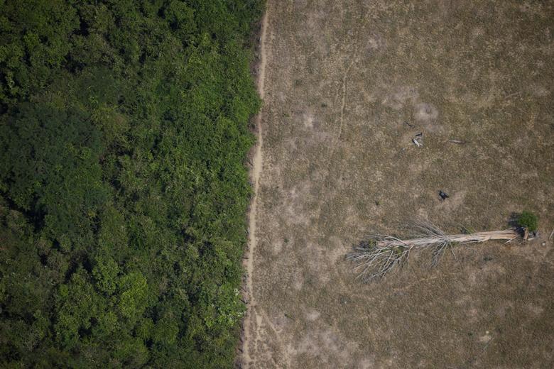 Fotó: Egy kidőlt fa fekszik a dzsungel területén, amelyet fakitermelők és gazdálkodók írtottak ki Porto Velho közelében (Brazília, Rondonia állam, 2020. augusztus 14.). REUTERS / Ueslei Marcelino