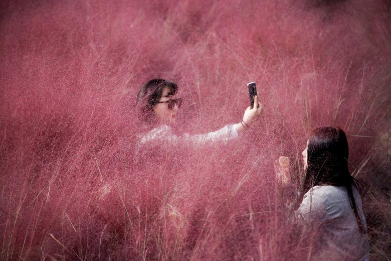 Fotó: Egy nő önarcképet készít, miközben barátnője épp sminkeli magát egy rózsaszínű, pázsitfű mezőn. Hanam, Dél-Korea, 2020. október 13. REUTERS / Kim Hong-Ji