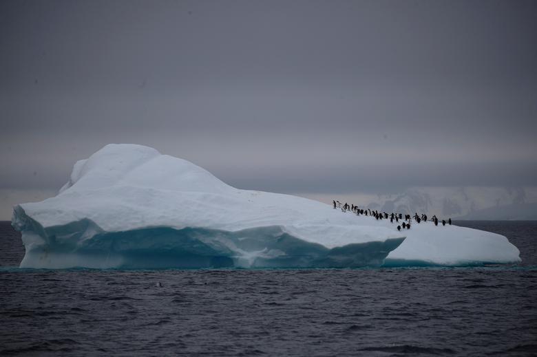 Fotó: Pingvinek egy csoportja az Antarktiszon fekvő Lemaire-csatorna közelében úszó jéghegy tetején, 2020. február 6. REUTERS / Ueslei Marcelino