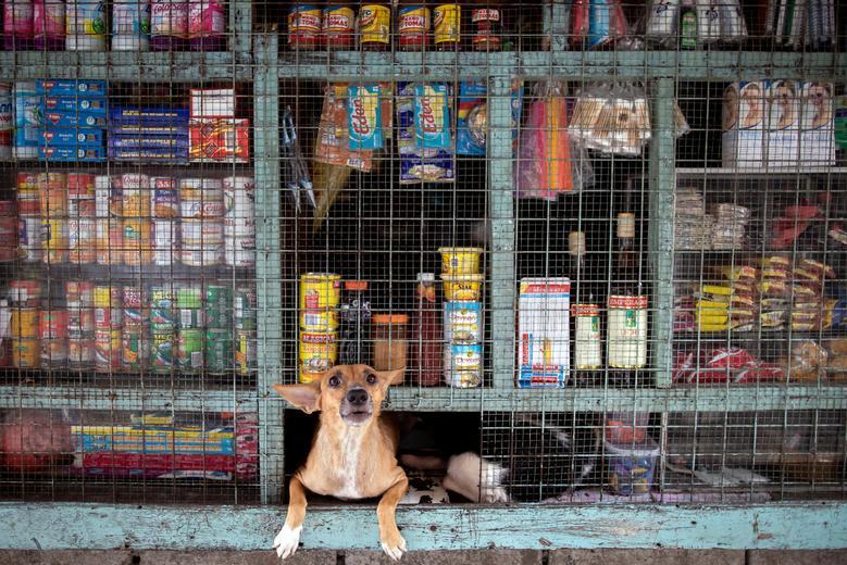 Fotó: Kutya nézeget egy vegyesboltból, Tondó, Manila, Fülöp-szigetek, 2020. október 6. REUTERS / Eloisa Lopez
