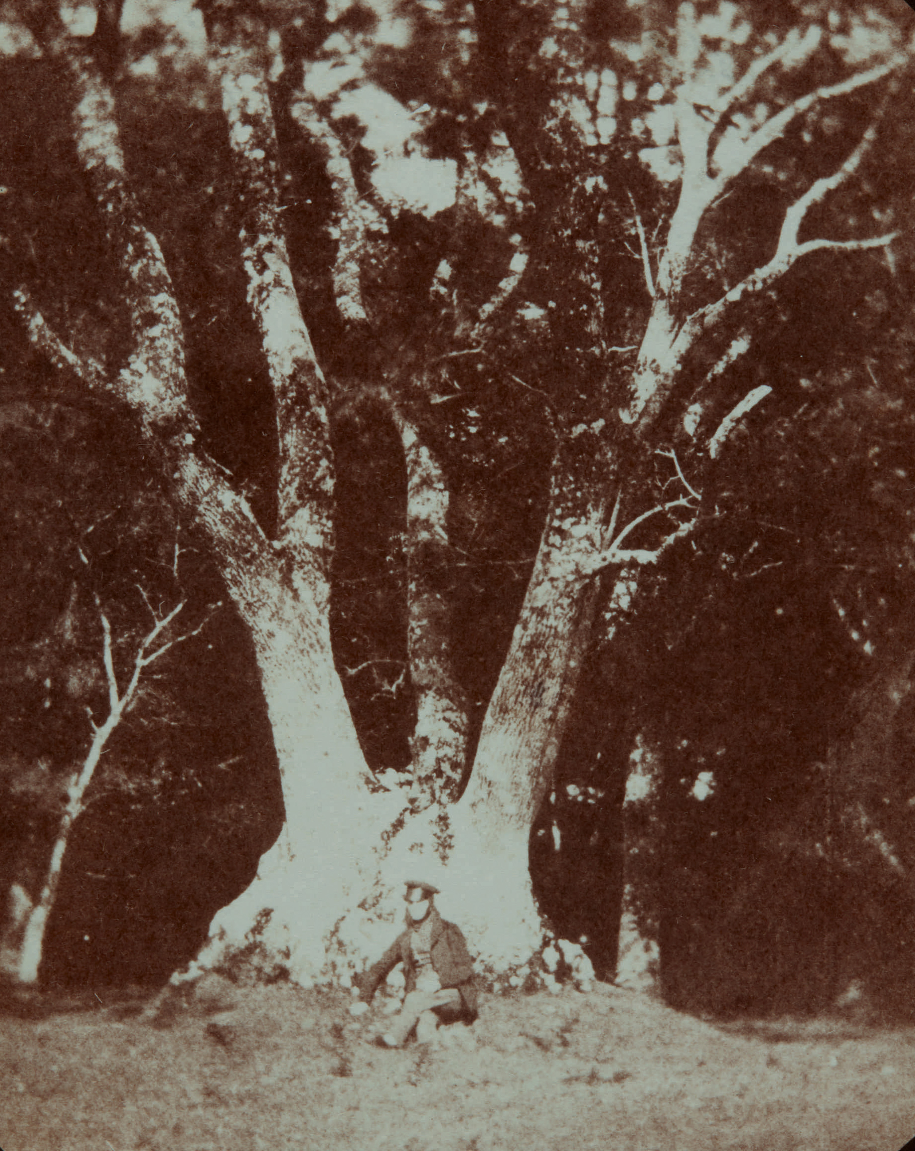 Fotó: William Henry Fox Talbot:<br />Ash tree in Ugbrooke Park, Devon <br />William Henry Fox Talbot Archive<br />Courtesy of Sotheby's