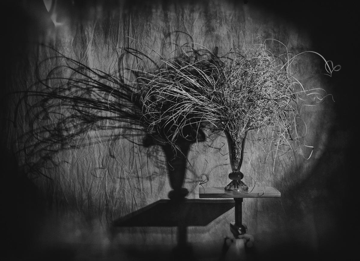 Fotó: Tímár Péter: Növény vázában, árnyékkal (TPZ_9959)– Budapest, 2019 © Tímár Péter