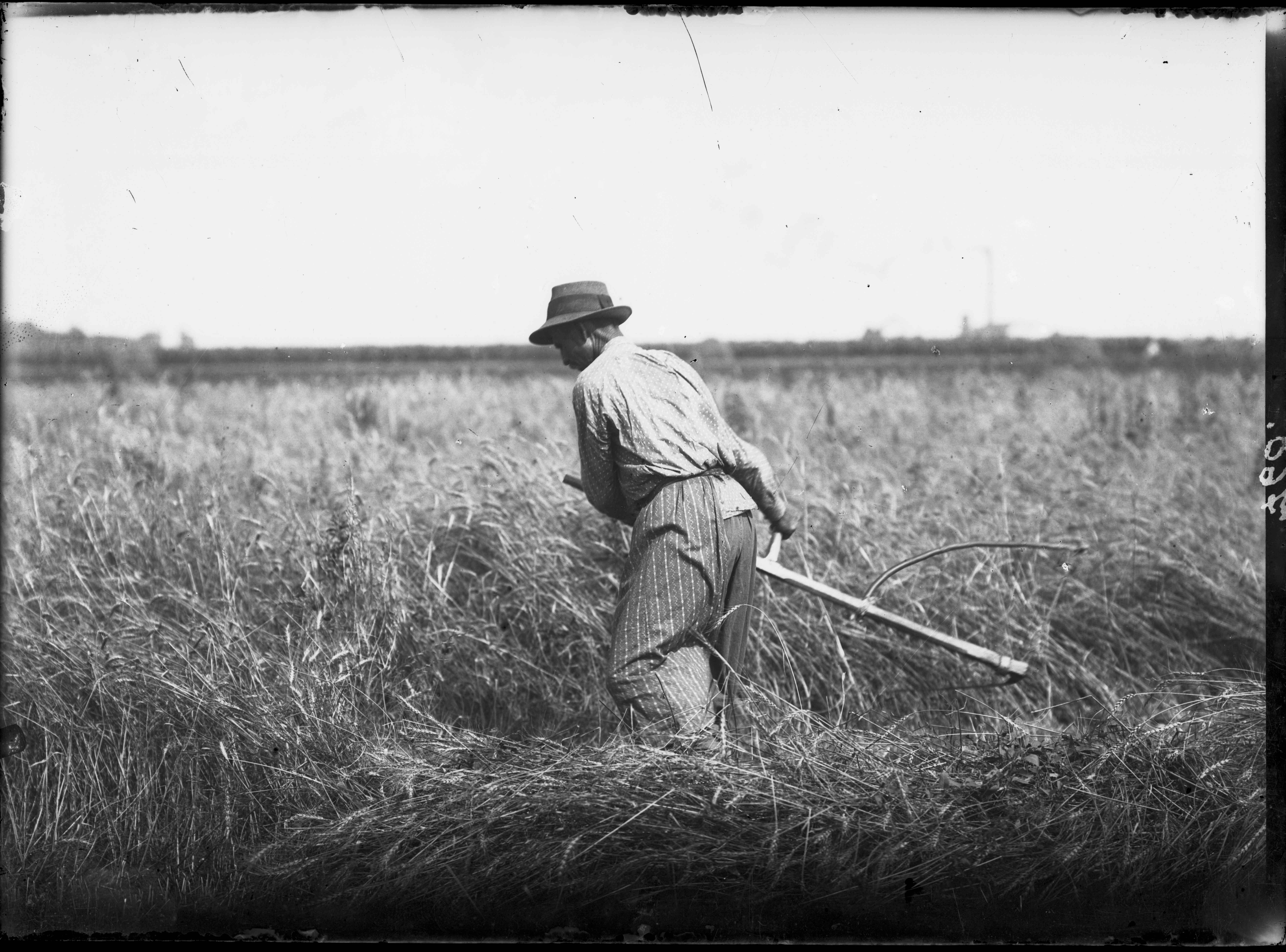 Fotó: Plohn József: Aratás kaszával. © Tornyai János Múzeum gyűjteménye, Hódmezővásárhely