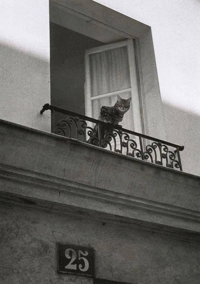 Fotó: Édouard Golbin: Quartier du Marais, Paris, Juillet 1985 © From Paris entre chats