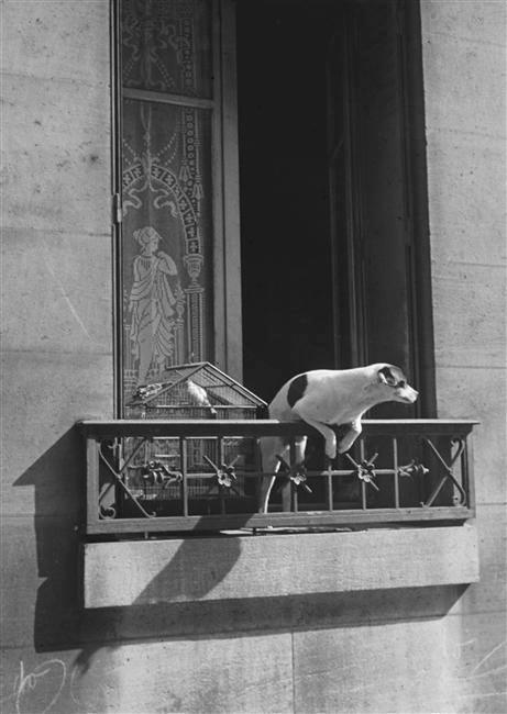 Fotó: André Kertész: Le chien concierge, Paris, 1926 © André Kertesz Médiathèque de l'Architecture & du Patrimoine